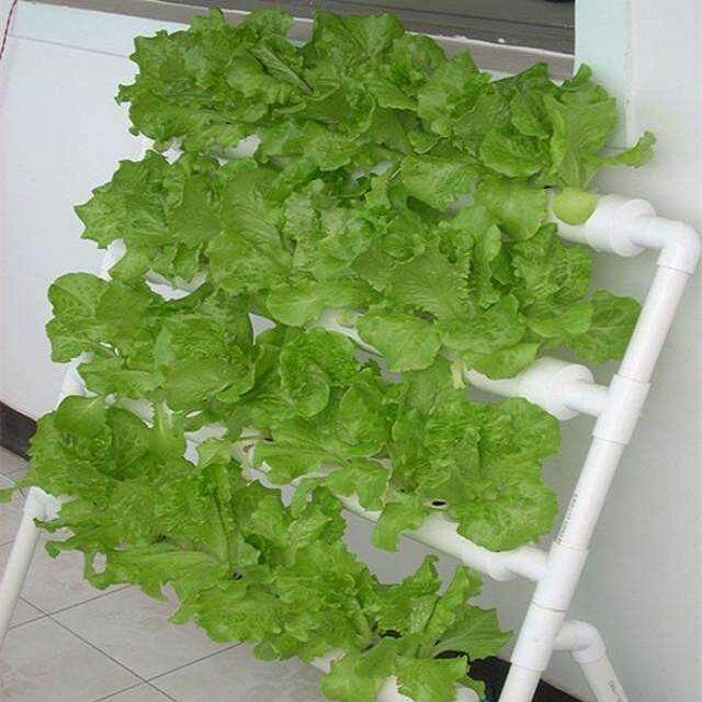 CFT hydroponic farming set DIY NFT growing systems for vegetable- 36 Holes