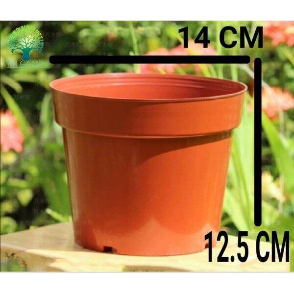 GAFRI DIAMTER 14 CM PLASTIC POT PASU BUNGA BROWN COLORCACTUS SUCCULENT MINI POT PASU BUNGA PLASTIK POT FLOWER POT