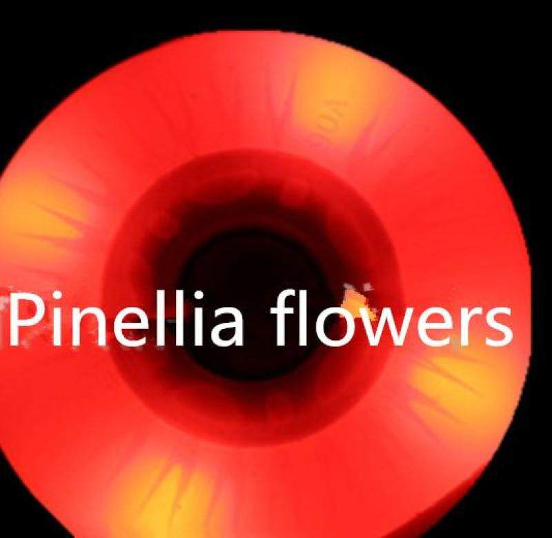 Phân phối Pinellia hoa 4 90A 72/76/80mm LED Sáng Trượt Bánh Xe PU Giày Trượt Patin