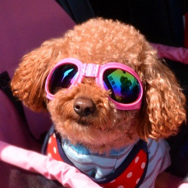 Chó Lớn Nhỏ Chải Chuốt Kính Chống Nắng Thời Trang Cool Mèo Cưng Kính Râm Phụ Kiện Cho Chó Con Động Vật Chihuahua S Nguồn Cung Cấp