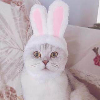 DIO Tai Thỏ Thỏ Cho Chó Cưng, Cho Mèo, Bộ Phụ Kiện Thú Cưng Dự Tiệc Cho Chó Mèo Nhỏ Trên Bán thumbnail