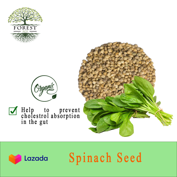 Spinach Seeds(Big Leaf) /Biji Benih Bayam (Daun Besar) for Salad/Soup Easy to plant/Grow your Superfood at home