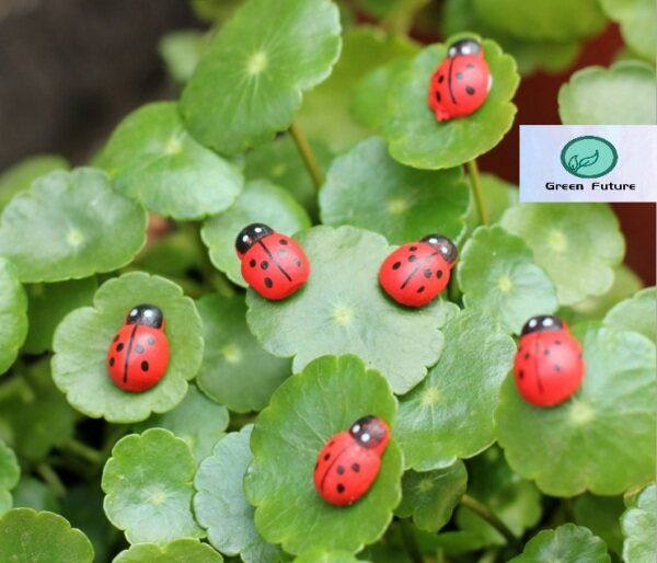 Mini for Succulent Terrarium Bonsai Cake Mini Cute Decor 木质甲壳虫瓢虫盆栽配件 Wooden Ladybird beetle pot plant accessories