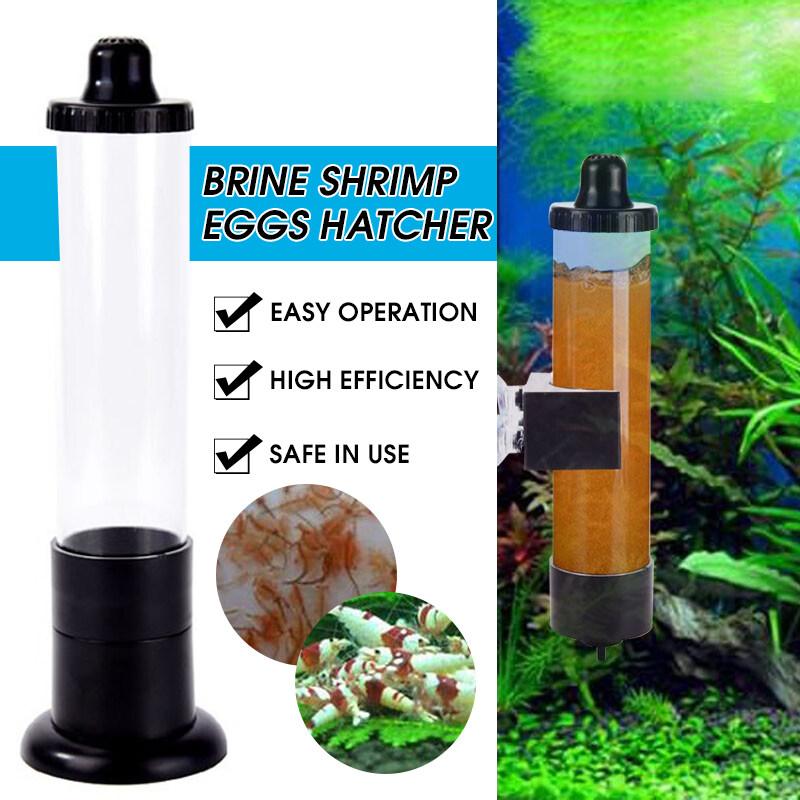 Bể Nuôi Cá Bể Cá Nóng Máy Ấp Trứng Tôm Nước Muối Artemia Bộ Dụng Cụ Ấp Trứng-