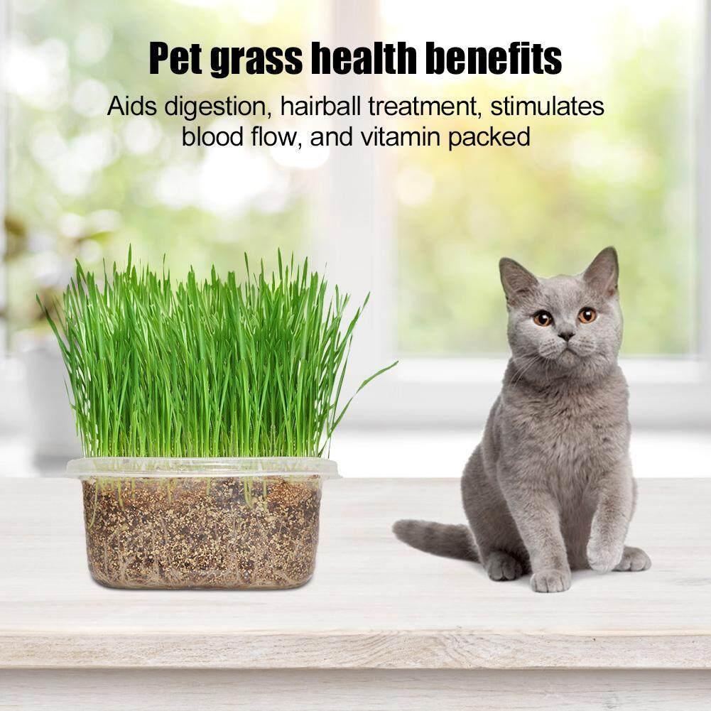 Deetee Germination Kit Diy Natural Organic Pet Grass Growing Kit For Pet Cat By Deetee Shop.