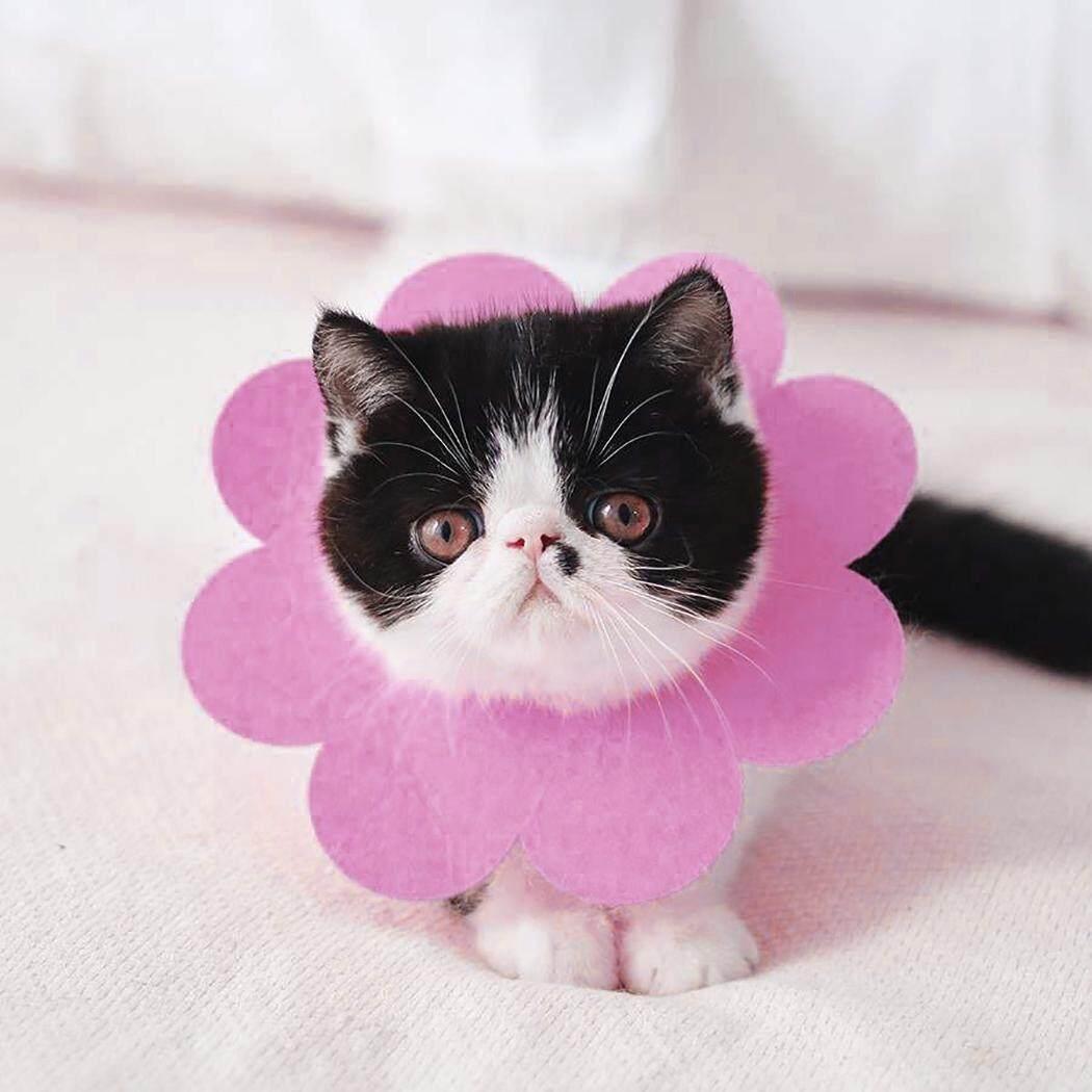 Thú Cưng Phục Hồi Cổ Dễ Thương Hình Hoa Cát Phục Hồi Cổ Nơ Đeo Cổ cho Mèo Con 19