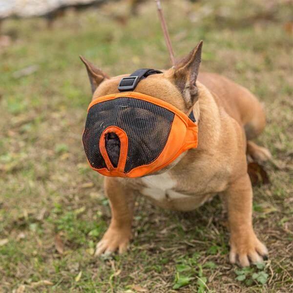 Đào tạo Có thể điều chỉnh Chống sủa Chống cắn Mõm ngắn An toàn Thoải mái thoáng khí Mõm chó