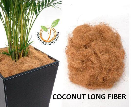 [HOT SELLING] 3 Pack Coconut LONG FIBER for mulching (office/house)/Live Plant #indoorplant #houseplant