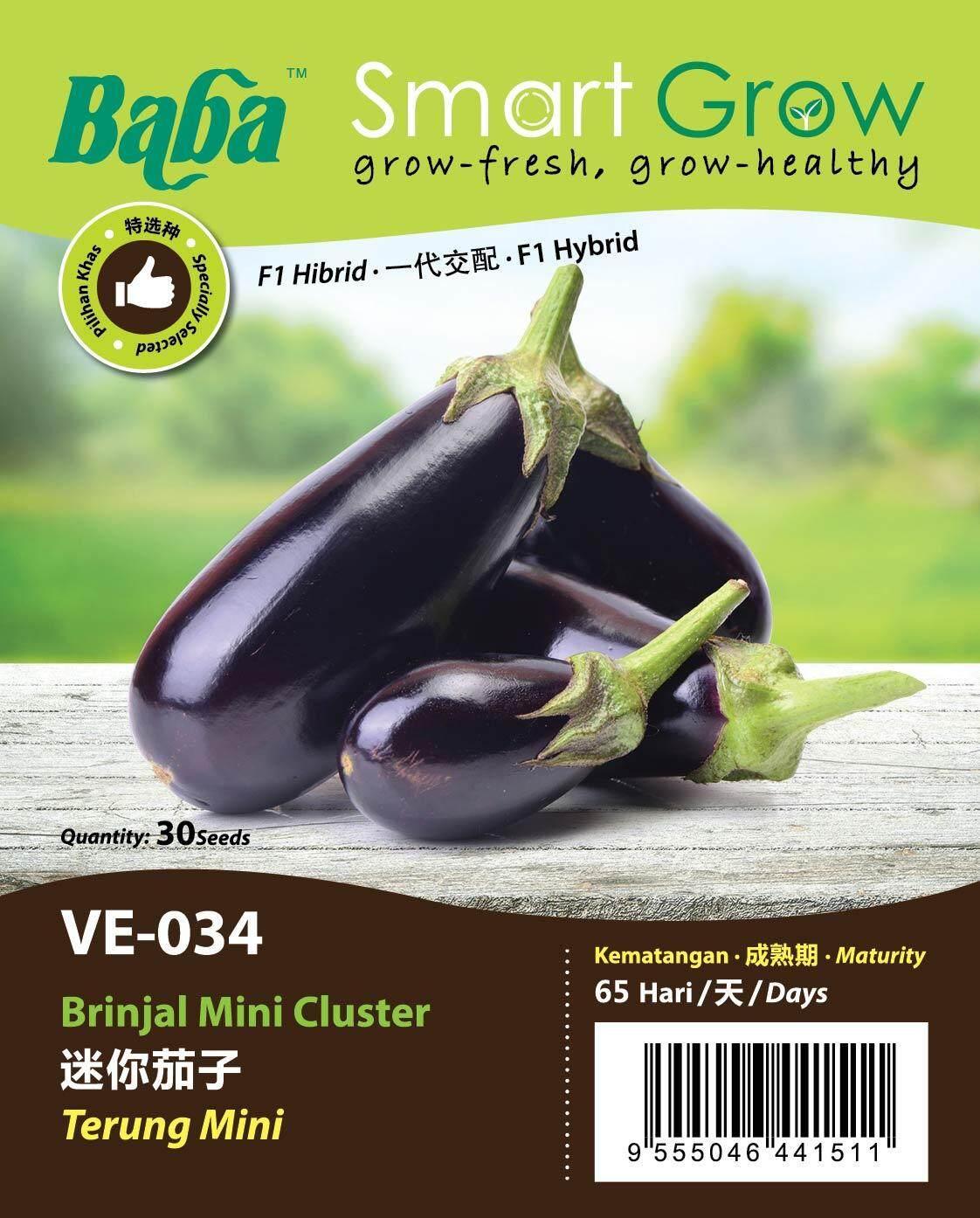 Baba Smart Grow - Brinjal mini Cluster 迷你茄子