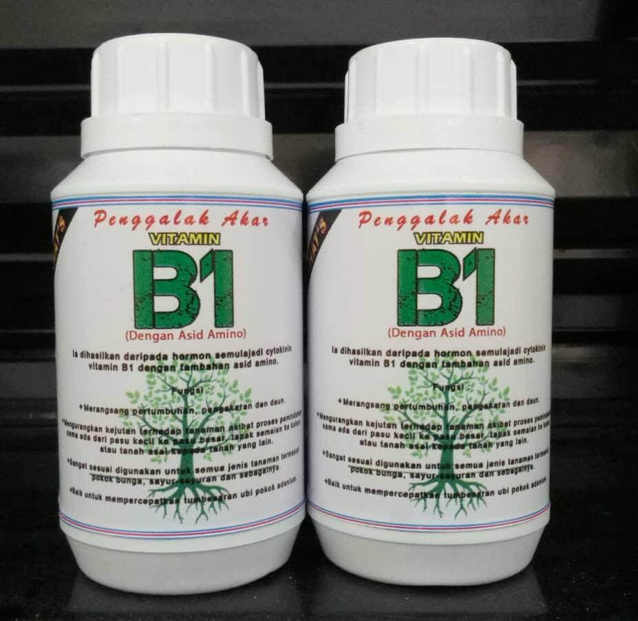 Penggalak Akar Vitamin B1