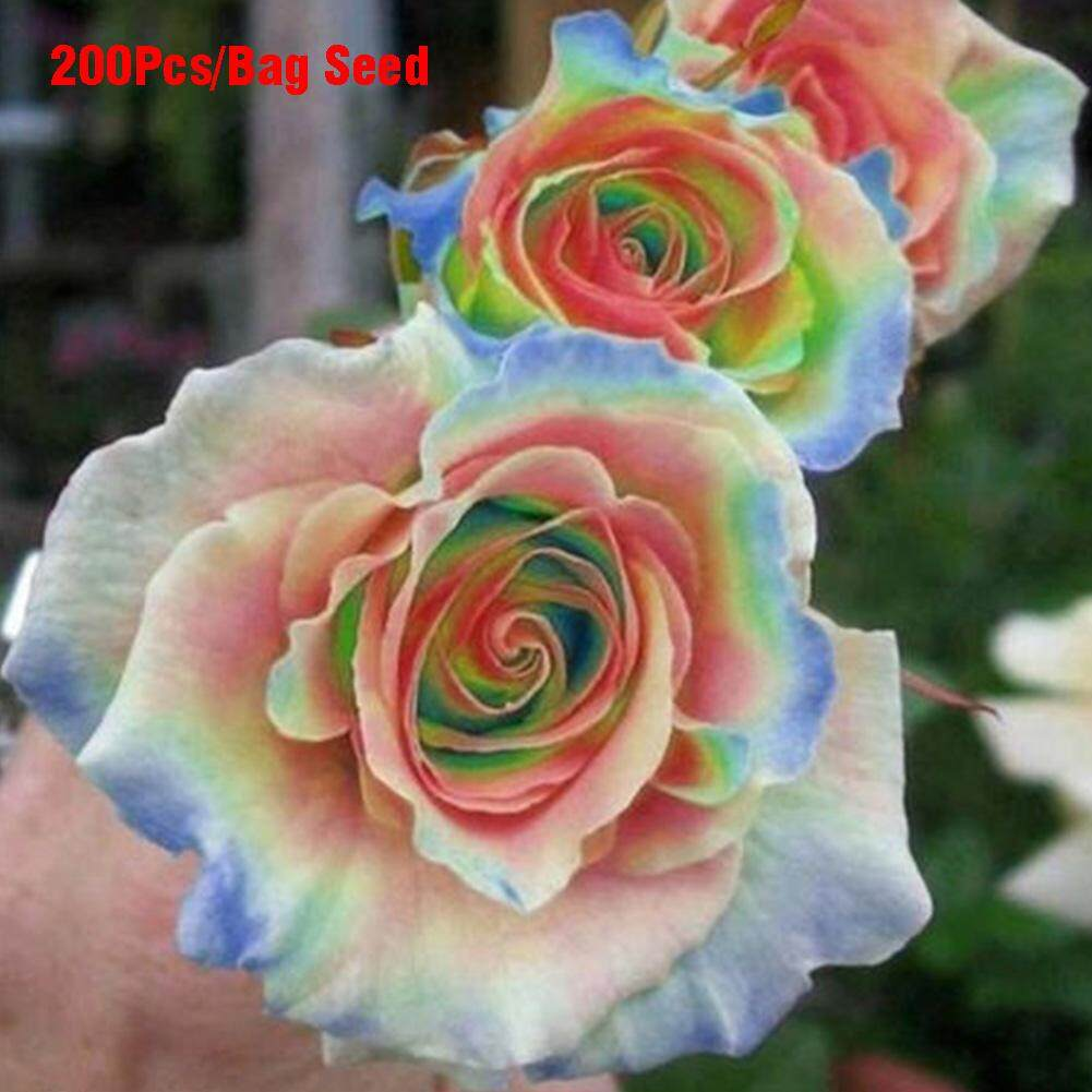 200pcs/pack Rare Mixed Colors Rose Seeds Rainbow Rose Bonsai Flower Balcony Plant By Fashiworld156.