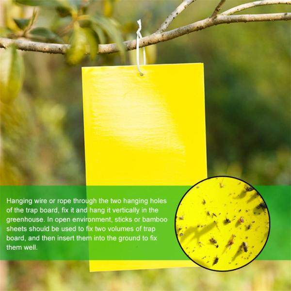 YYR-Dual-Sided Yellow Sticky Traps for Flying Plant Insect Like Fungus Gnats