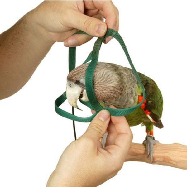 A YAYA 4 Có ích Dễ thương Nguồn cung cấp cho chim Đồ chơi đào tạo ngoài trời Cầm tay Có thể điều chỉnh Dây huấn luyện thú cưng Bird Leash Dây kéo Khai thác con vẹt