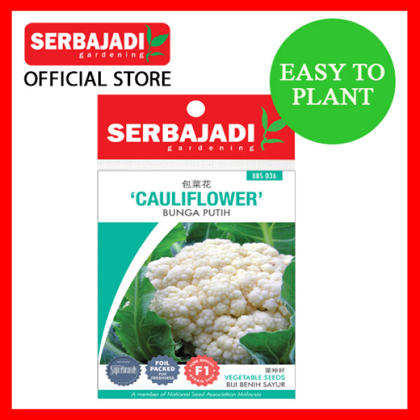 SERBAJADI Vegetable Seed Hybrid Cauliflower - Bunga Putih 88seeds [READY STOCK IN MALAYSIA]