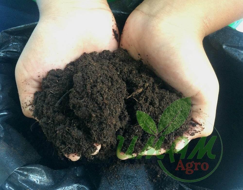 Peat Moss / Tanah semaian / Seadling soil  - 1kg