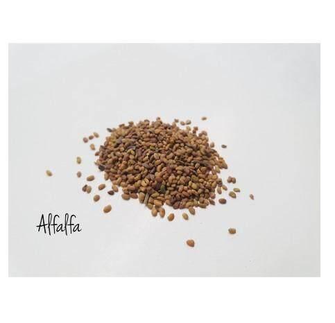 SEEDS Alfalfa / 苜蓿