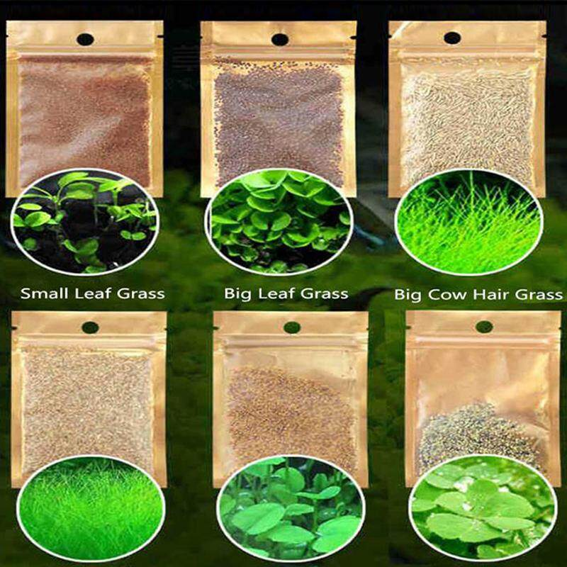 Graceful 6 Pack Aquarium Plants Aquatic Water Grass Seeds Fish Tank  Landscape Ornament