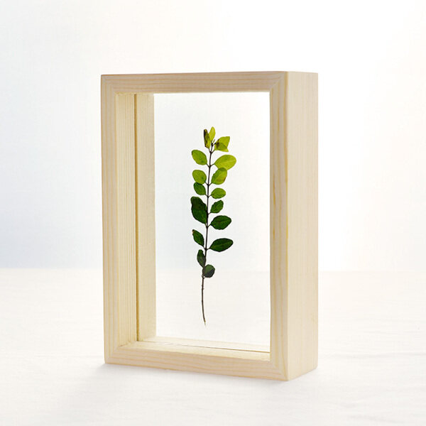 ✷ Nordic glass photo frame set up creative transparent plant specimen box hanging wall contracted solid wood logs transparent frame