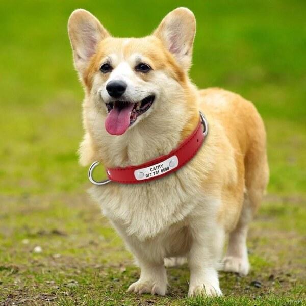 Vòng Cổ Chó Cá Nhân Vòng Cổ ID Thú Cưng Bằng Da Khắc Tên Cho Chó