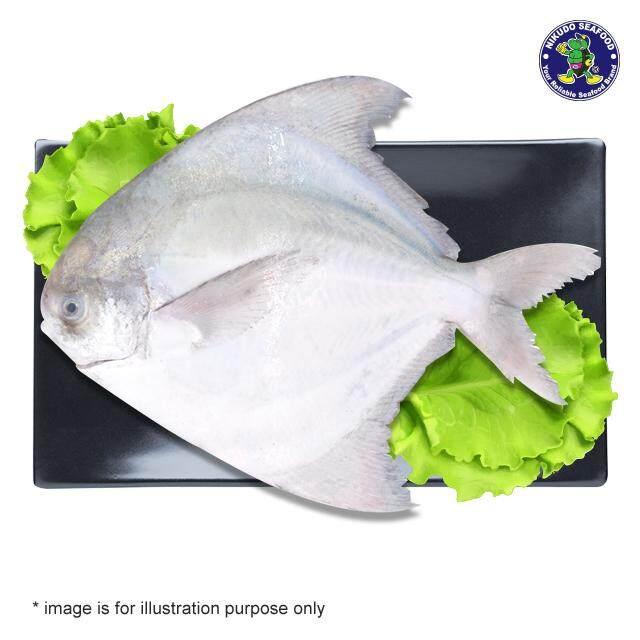 (KL & Selangor Delivery Only) Nikudo - Chinese Pomfret Fish 700/800g (Sabah Special)