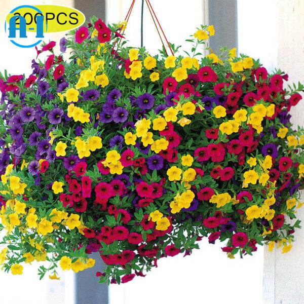 A-I 200 Pcs/Set Mixed Colors Hanging Petunia Flower Seeds Home Garden Balcony Bonsai Pot Planting Flowers
