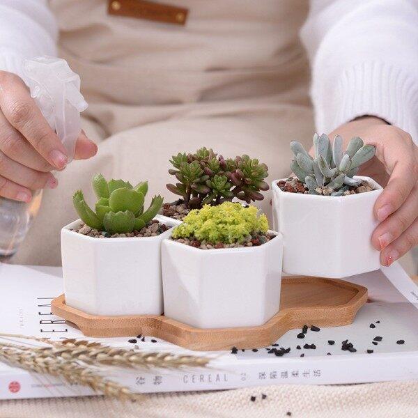 [READY STOCK] Succulent Pot / Cactus Pot / 多肉小花盆 / 肉肉小花盆 - 4pcs Hexagon - 19.5cm