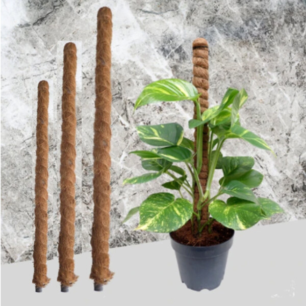 Moss Coco Pole Stick 2ft, 2.5ft, 3ft, 4ft, 5ft Size