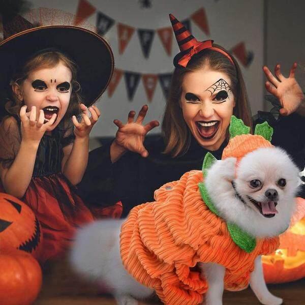 Trang Phục Halloween Vui Nhộn Cho Chó, Trang Phục Halloween Cho Chó, Có Mũ Bí Ngô, Cỡ S/M/L