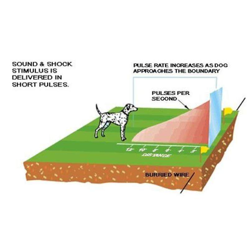 Pet Training Control Collar Underground Dog Electric Fence Device Fencing System Malaysia