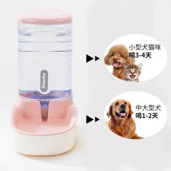 Bố Trí Phòng Ngủ Chó Samoyed Trong Trang Trại Chó Máy Thức Ăn Cho Chó Tự Động Cho Ăn Chó Và Mèo Đổ Bộ