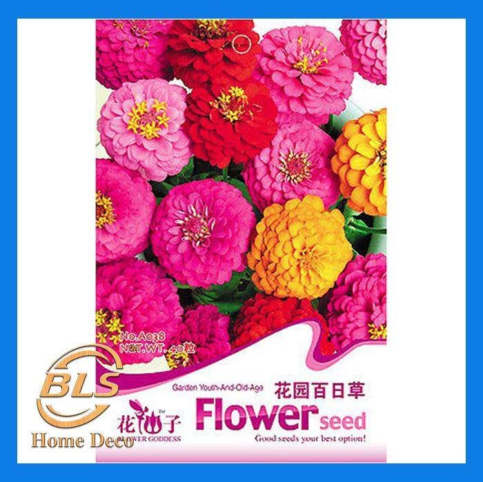 A038 GARDEN YOUTH-AND-OLD-AGE FLOWER GODDESS FLOWER FRUIT HERB SEED