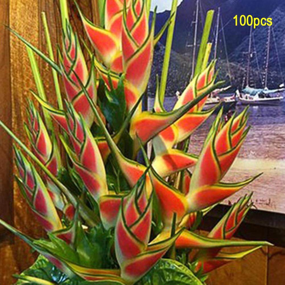 100pcs/pack Heliconia Planting Sparrow Flower Flower Seeds Home Garden Bonsai Potted Plant By Fashiworld156.