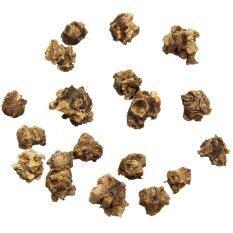 Ginseng Fruit Seeds Set of 10 (Brown)