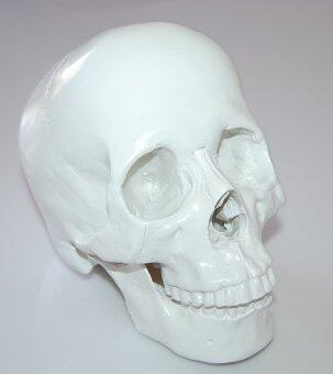 1:1 Human Skull Resin Model Anatomical Medical Teaching Skeleton White