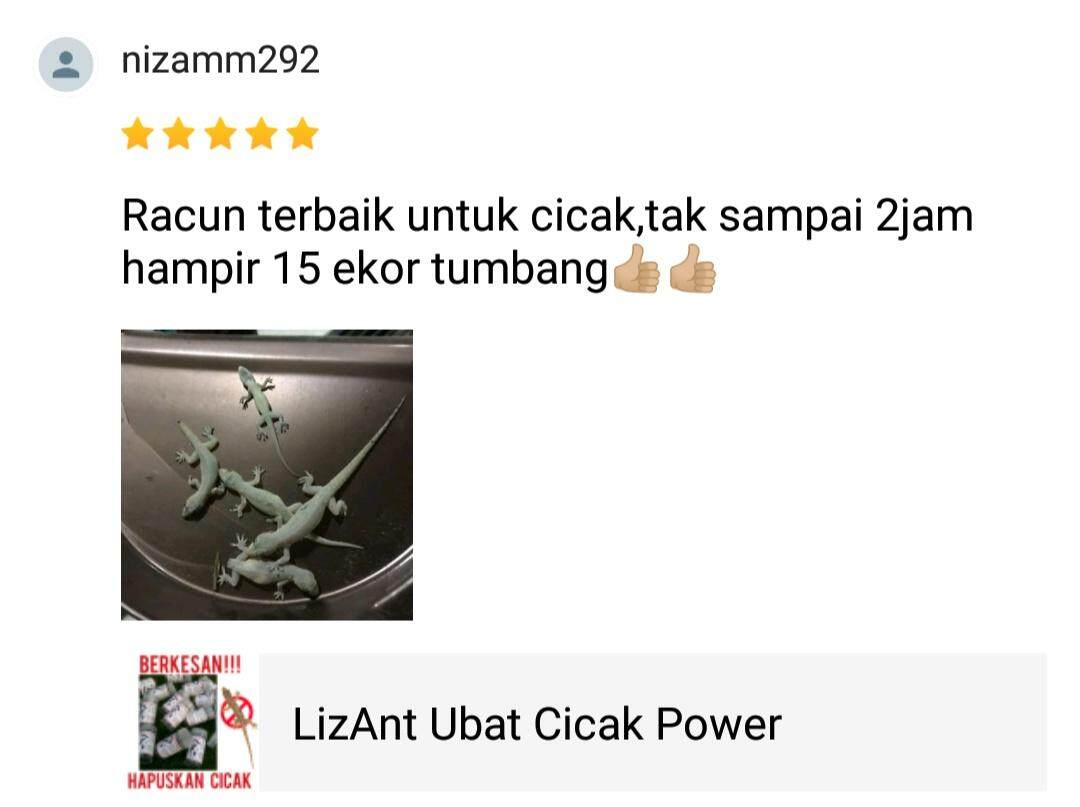 Image result for racun cicak lizant